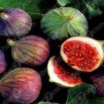 İncirin faydaları neler? Kuru ve yaş incirin mucizevi yararları...