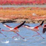 Yüz binlerce kuşun yuvası: Manyas Kuş Cenneti