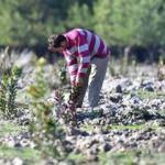 5 bin köye 5 bin orman projesinde sona gelindi