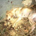Korkunç! Sokak köpeğini işkenceyle öldürdüler