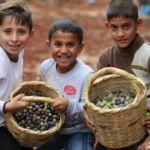 Suriyeli yetimler zeytin topladı