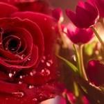 Ayetel Kürsi ezberle ve dinle: Ayetel Kürsi okunuşu - anlamı & fazileti...