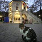 İpek Yolu'nun son durağı: Bursa, Kozahan