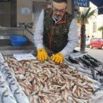 Hamsi ve palamudun yerini dip balıkları aldı