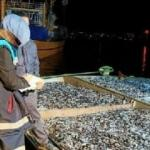 Rize'de 30 ton balığa el konuldu