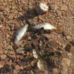 Mersin'de korkutan görüntü! Binlercesi bu halde bulundu