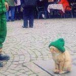Beresini, üşümesin diye kedisiye takan çöpçü fenomen oldu