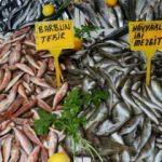 Hamsi erken göç etti, balıkçıların umudu oldu
