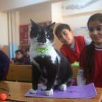 Kedi Hüsnü, okulun 860'ıncı öğrencisi oldu