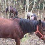 Büyükada'da karantinaya alınan atlar görüntülendi
