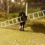 Kafasını merdivene sıkıştıran ineği itfaiye kurtardı