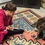 Ünlü sanatçı Sezen Aksu sahiplendiği sıpayı yalısına aldı