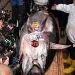 Tokyo'da orkinos balığı 11 milyon liraya satıldı