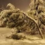 Yoğun kar yağışı ağaçları devirdi