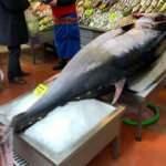 Dev balık görenleri şaşkına çevirdi