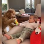 Pelin Akil'in kızı ve köpeği arasındaki oyuncak kavgası!