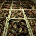 Kaçak avlanan 2 ton balığa 10 bin lira ceza