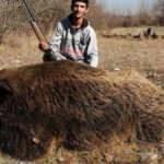 300 kiloluk Çal Canavarı öldürüldü!