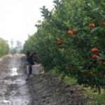 Adana'da üretiliyor! Avrupa'ya ihraç ediliyor