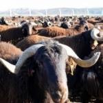 """""""Hayvancılığa son 17 yılda 33 milyar lira destek"""""""