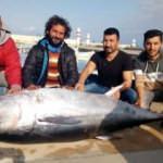 Dev orkinos, Türk balıkçıları Yunanistan'a sürükledi