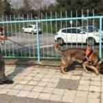Elektrik arızasını tespitte artık köpekler devrede