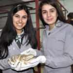 Ders için üretmeye başladıkları mantarı ilçeye satıyorlar
