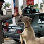 Aracına yakıt almaya gelenler şaşkına dönüyor
