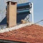 Evin çatısında şaşkına çeviren görüntü