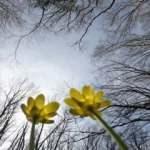 İğneada Longoz Ormanları'nda bahar güzelliği
