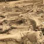 Kazdıkça acı çıktı: 108 yıl sonra 30 şehidin mezarına ulaşıldı
