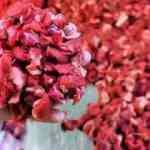 Kırmızı et üreticilerinden 'sıkıntı yok' mesajı