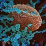 Koronavirüs insan hücrelerine ne yapıyor? Adım adım görüntülendi