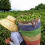 Bazı tarımsal ürünlerin ithalatına kayıt şartı