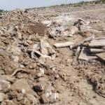 Hafriyat sahasında insan kemikleri bulundu