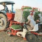 Çiftçi iş başında tarlalar harıl harıl