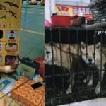 'Virüs bitti' diyen Çin'de tepki çeken görüntüler! Vahşi hayvan pazarı tekrar kuruldu