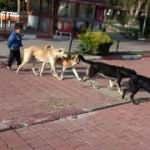 Tarım Bakanlığı sokak hayvanları için harekete geçti