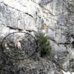 Dağ keçisinin 'drone'la imtihanı