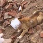 Jandarma ekipleri kafası konserve kutusuna sıkışan yavru köpeği kurtardı