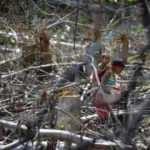 Koronavirüs Amazon ormanlarında yaşayan kabileye de sıçradı