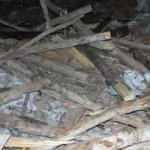 Rüzgardan ahır çöktü: 6 kurbanlık hayvan öldü