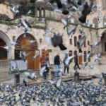 Şanlıurfa'da türbeler ziyarete kapatıldı