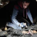 Mağarada doğurduğu 9 yavru ile birlikte kurtarıldı