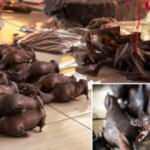 DSÖ'den Çin'e şartlı onay: COVID-19'un yayıldığı vahşi hayvan pazarlarını yeniden açabilirsiniz