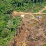 Amazon yağmur ormanları karantina günlerinde 2 kat daha hızlı yok oldu
