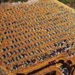 Brezilya'da ölüler toplu mezarlara gömülüyor