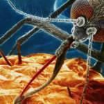DSÖ açık açık uyardı: Afrika'daki sıtma nedenli ölümler iki katına çıkabilir