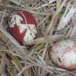 Çanakkale'de şaşırtan olay! Yumurtayı görünce inanamadı
