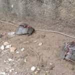 Antalya'da kaplumbağa katliamı